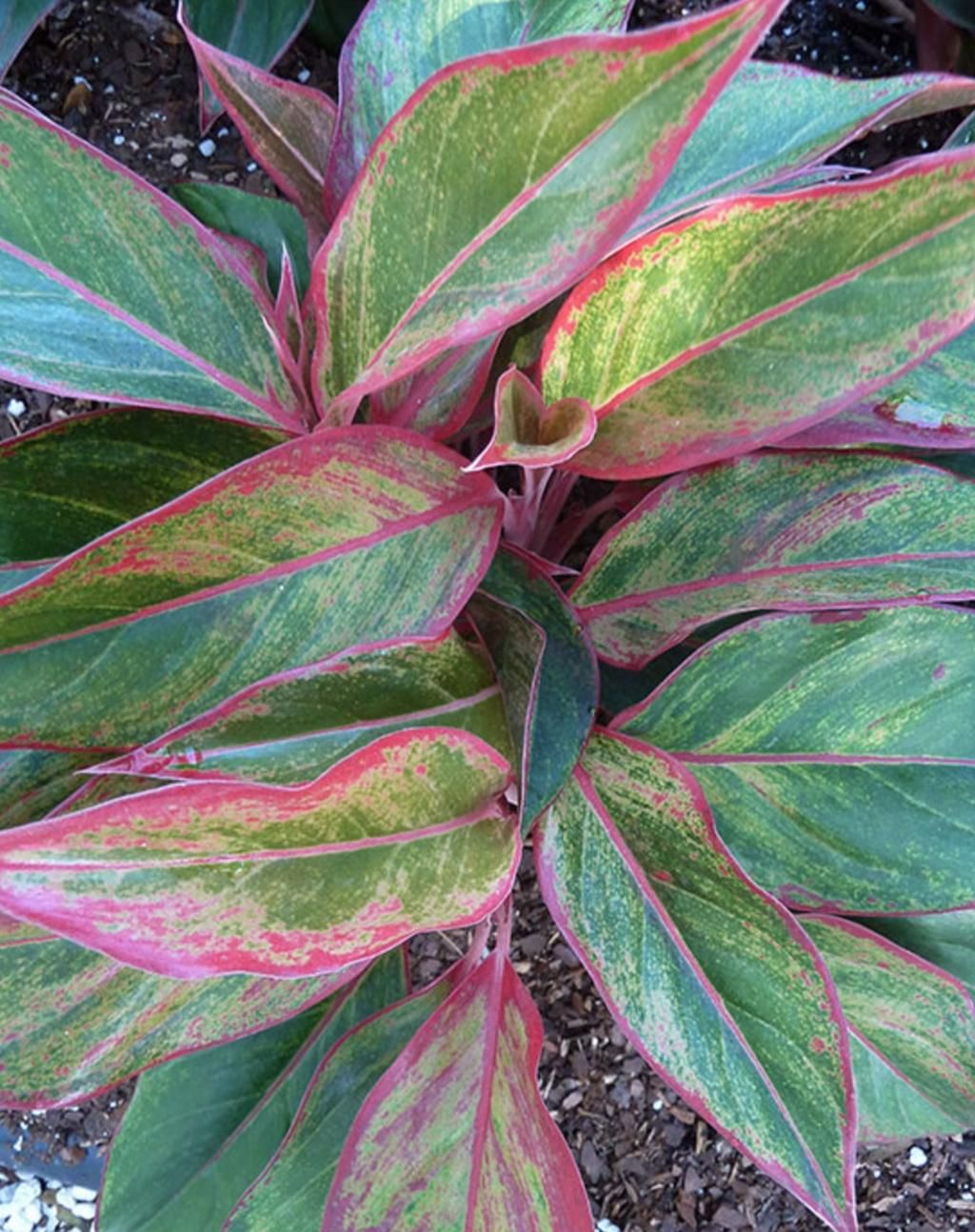 10 plantes z ro lumi re qui survivent dans un sous sol sombre et les pi ces mal clair es - Plante salle de bain sombre ...
