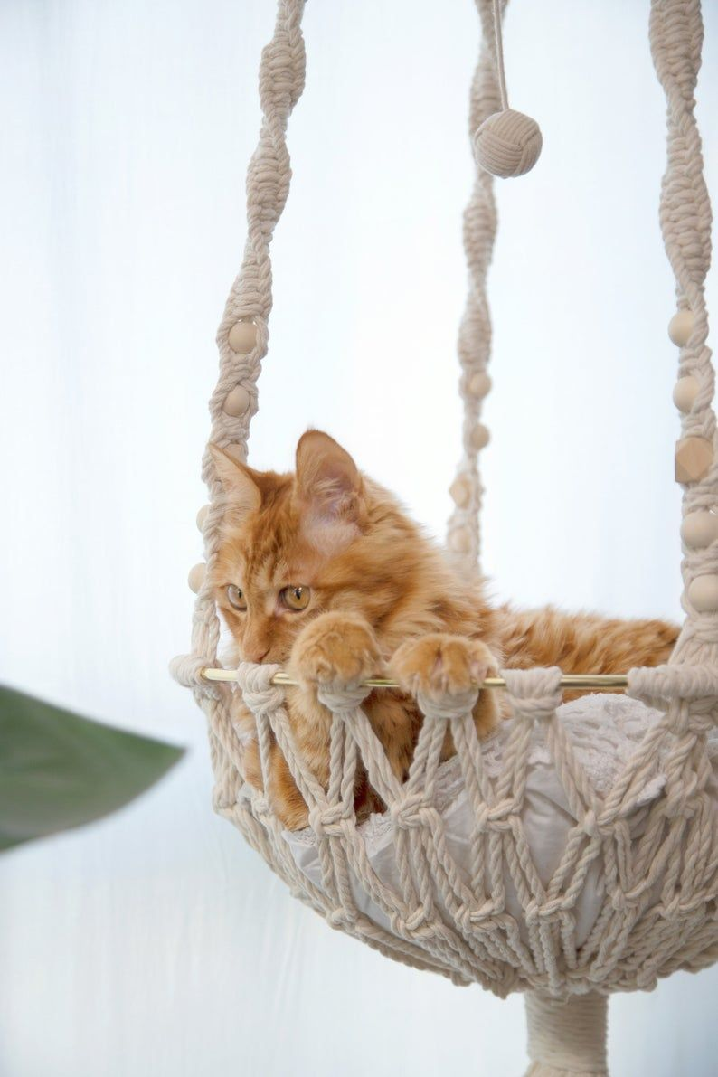 20++ Diy hanging cat bed ideas