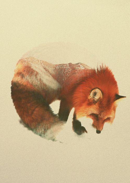 Andreas Lie - SNOW FOX