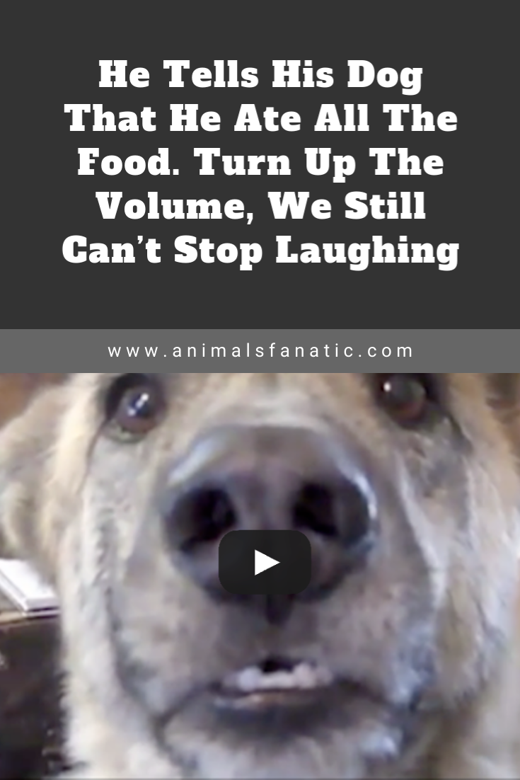 He Tells His Dog That He Ate All The Food. Turn Up The Volume, We Still Can't Stop Laughing