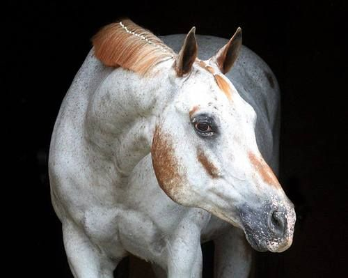Neat looking horse