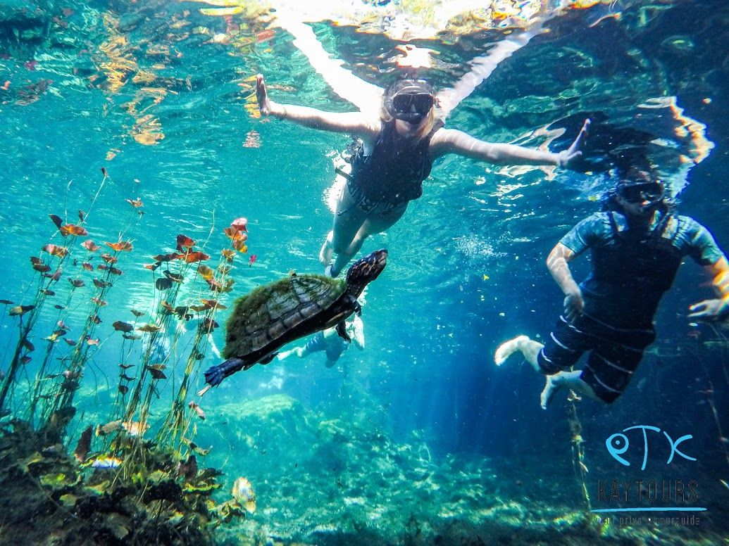Snorkeling in Cenotes in Mexico | https://www.kay.tours/