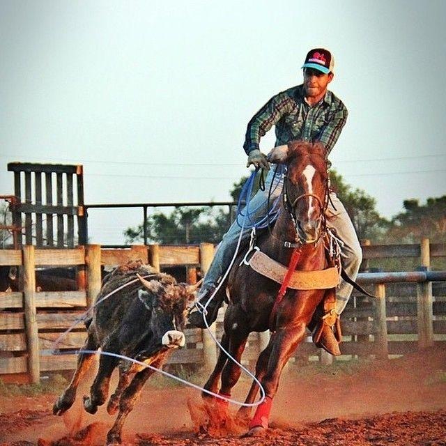 bcec804757383 ...  bones  country  cowgirl  cowboy  western  west  texas  texan  prca   laço  videos  videomaker  drone  gopro  design  boi  gado  nelore  angus   cattle
