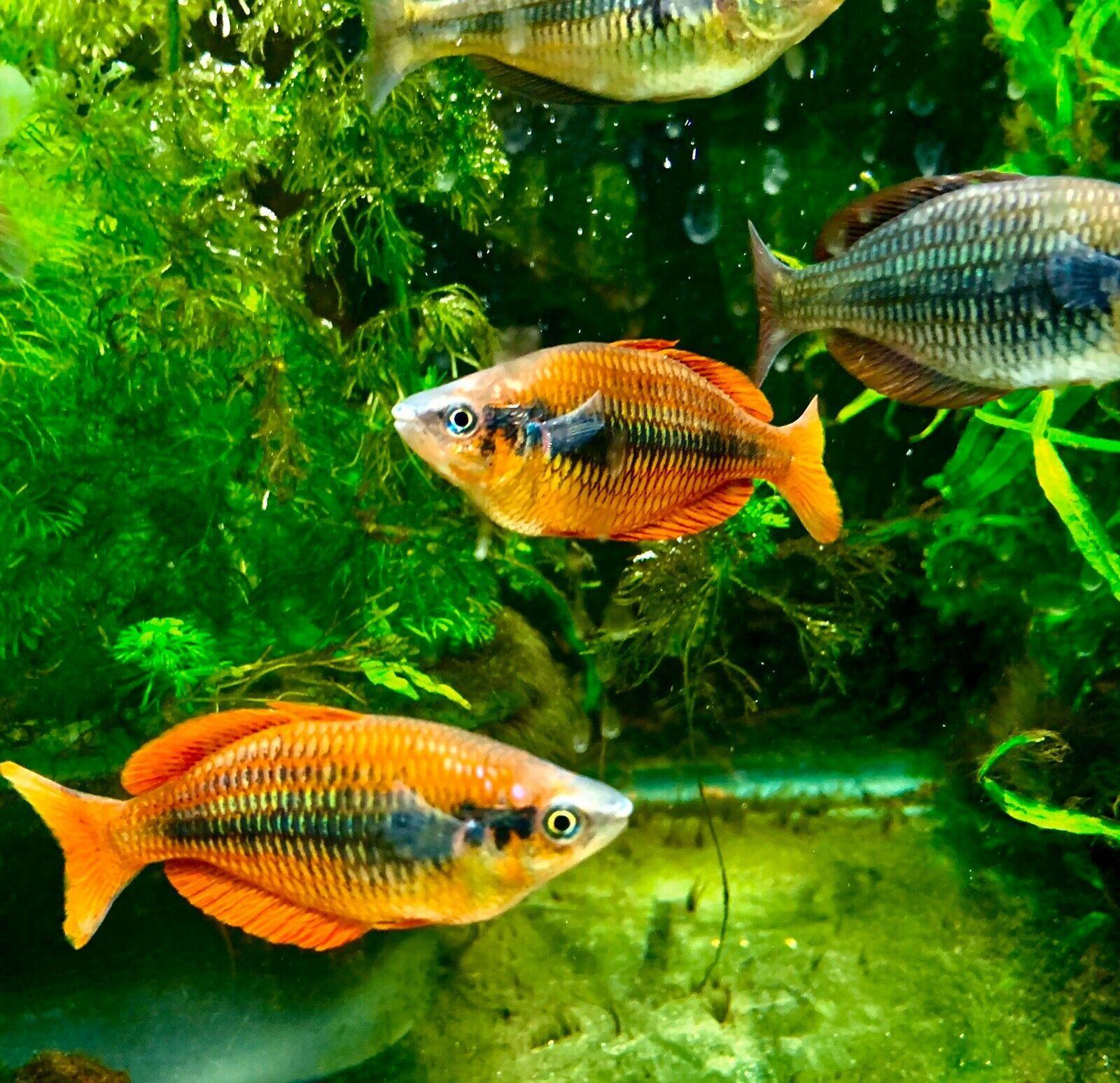 Pin On Oddball Freshwater Fish