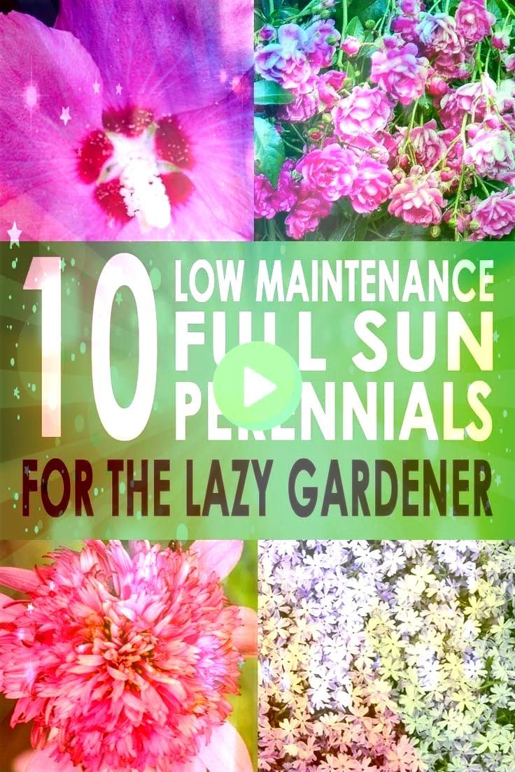 Sun Perennials 10 Beautiful Low Maintenance Plants That Thrive In The Sun  Gardening For Beginners Full Sun Perennials 10 Beautiful Low Maintenance Plants That Thrive In...
