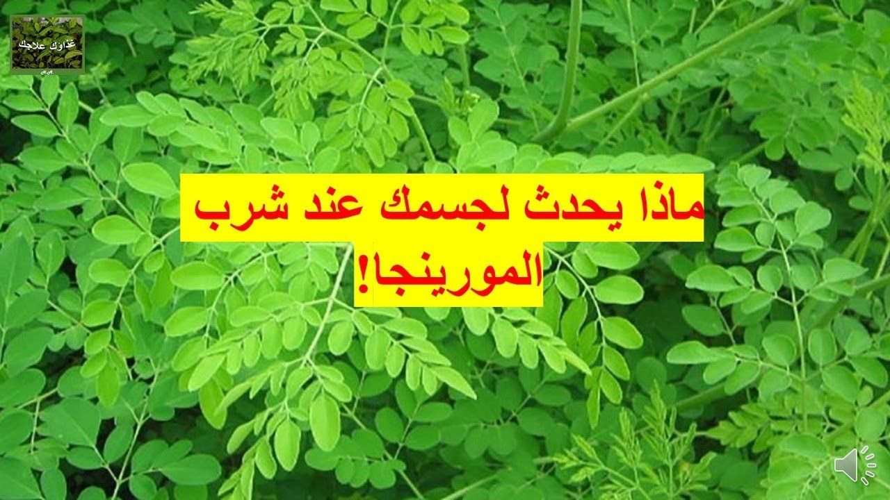 The Magical Benefits Of Moringa Leaf هل تعلم ما هي فوائد أوراق المورينج Remedies Fun Facts Healthy Recipes