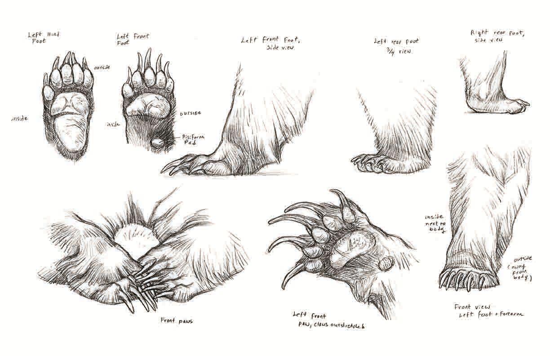 danielle macivor   anatomia osos   Pinterest   Anatomía, Anatomía ...
