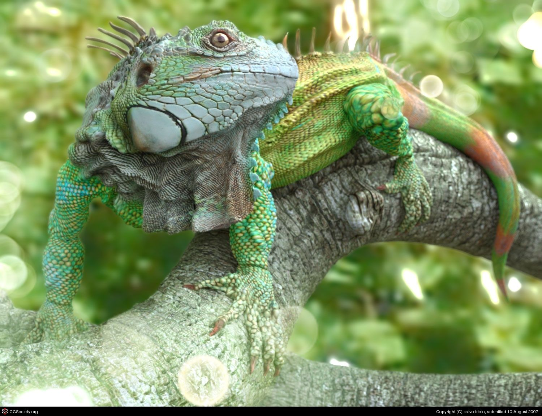 IGU 1 - an iguana model, salvo triolo