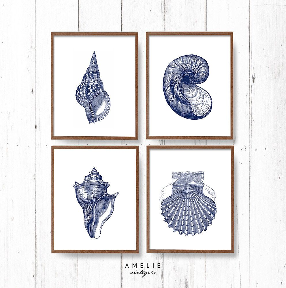 Hampton style wall art coastal sea shell print set blue
