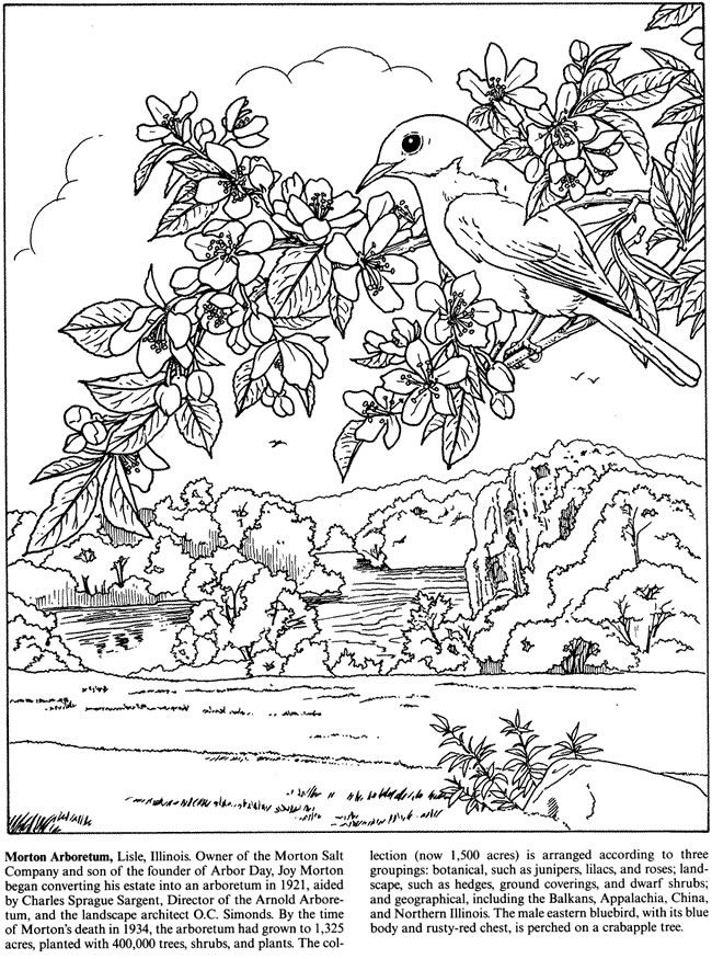 Blue Bird on Crab Apple Branch - Botanical Gardens Coloring Page ...