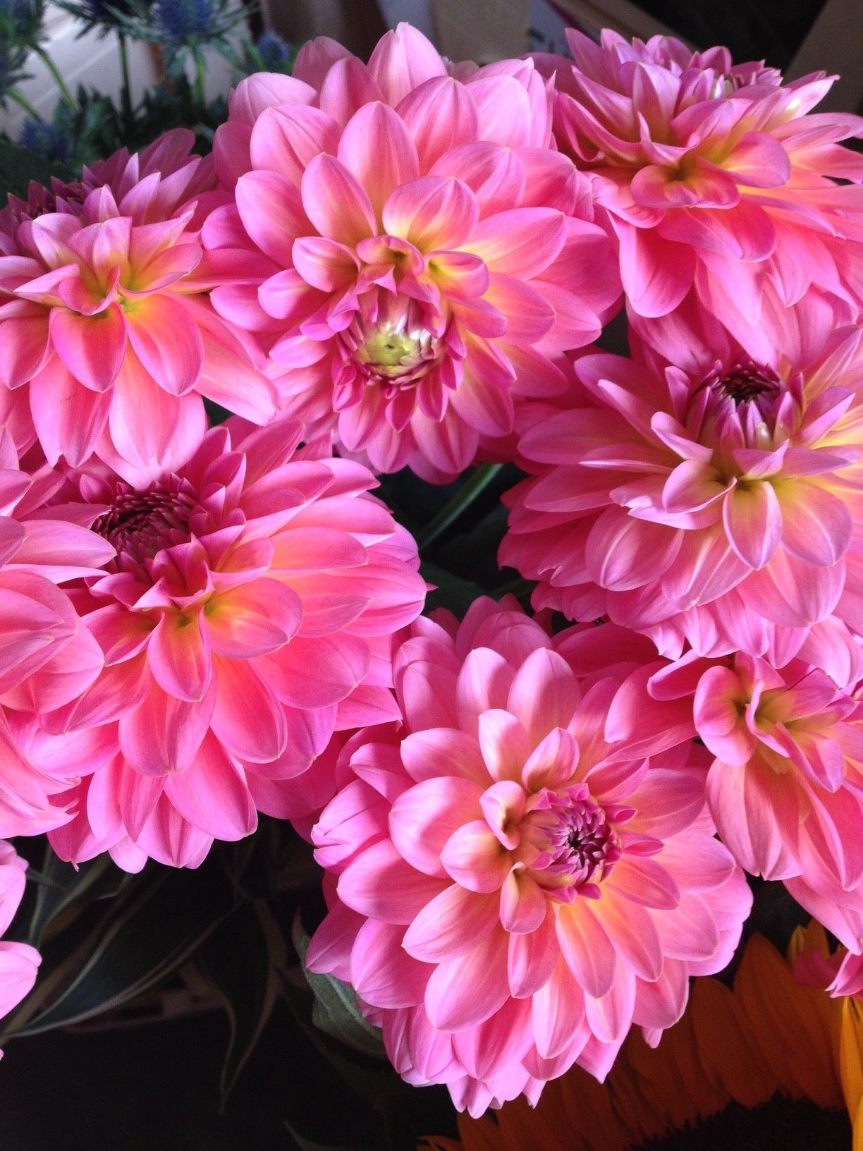 Dahlia pink runner which is a great match to the miss piggy rose dahlia pink runner which is a great match to the miss piggy rose sold in bunches of 10 stems from the flowermonger the wholesale floral home delivery izmirmasajfo