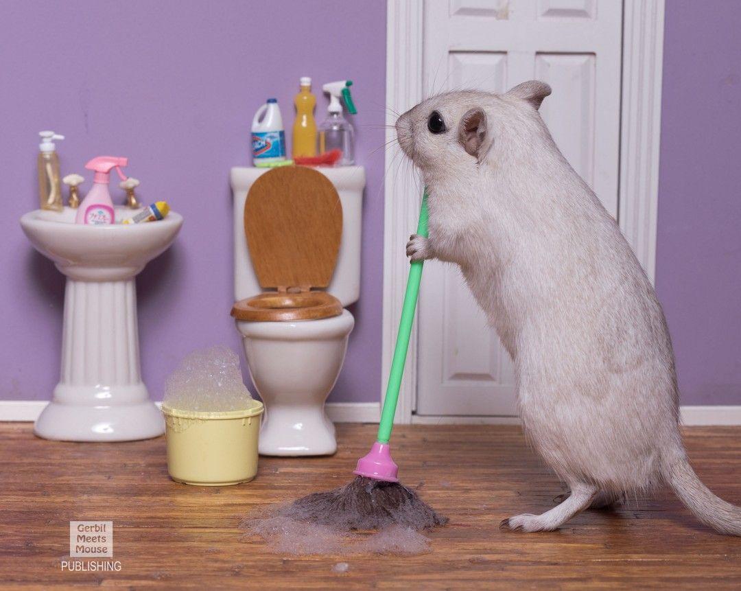 Mopping the bathroom  #gerbil #gerbille #rement #rementjapan #dollshouse #dollhouseminiatures #stayhome #stayhomechallenge #stayhomestaysafe #animalsdoingpeoplethings #animalsplaying #babyanimals #petsofinstagram #petsofig #gerbilsofinstagram #rennmaus #gerbilsofinsta #dailyfluff #smallpets #pocketpets #cutepets #weeklyfluff #gerbillife #gerbillove #love #petsagram