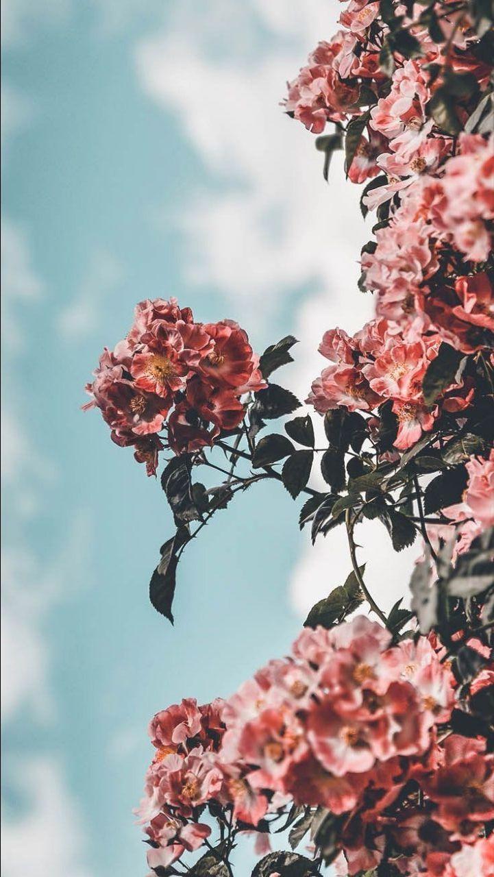 Pin by jieunʕ•́ᴥ•̀ʔ on [wall] Flower iphone wallpaper