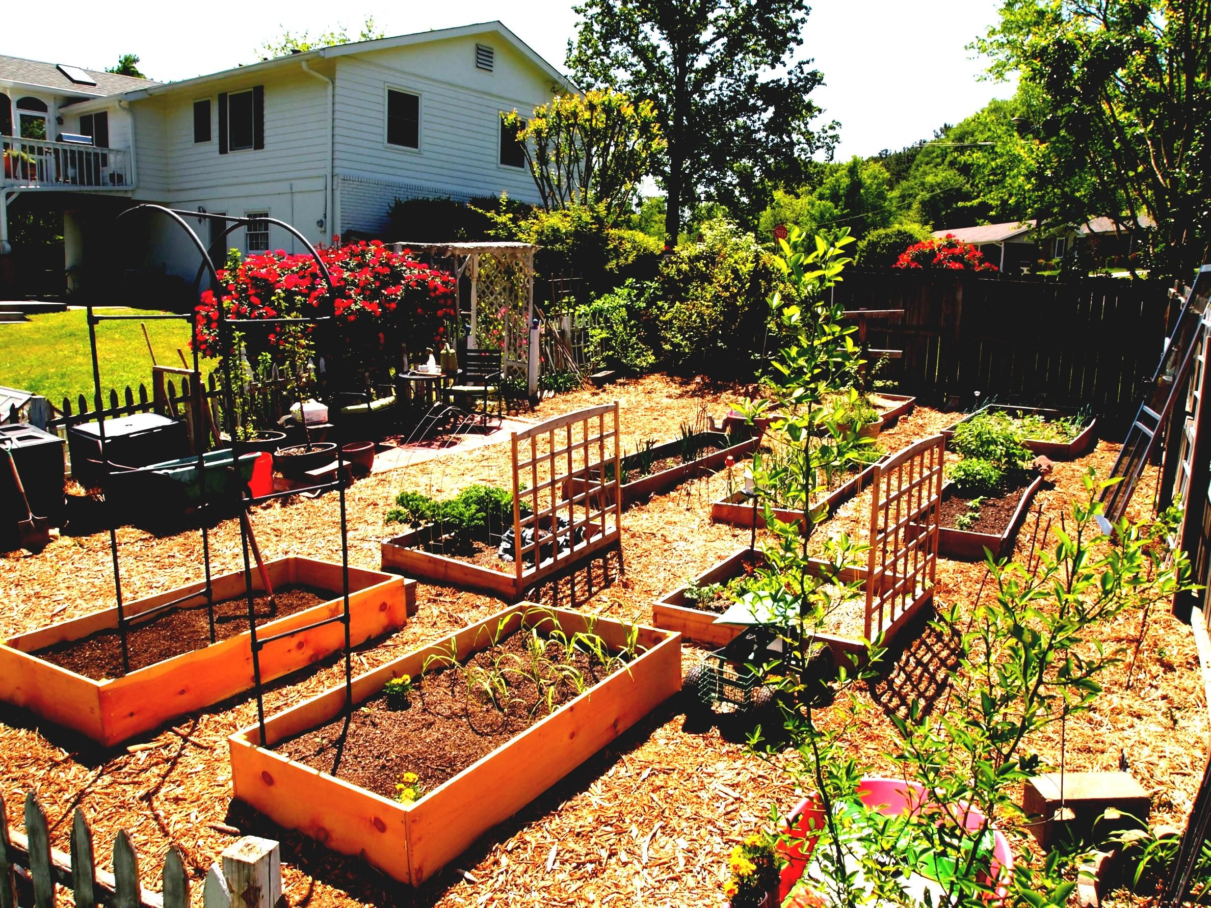 Photo Of Best Vegetable Garden Layout Ideas Beginners ...