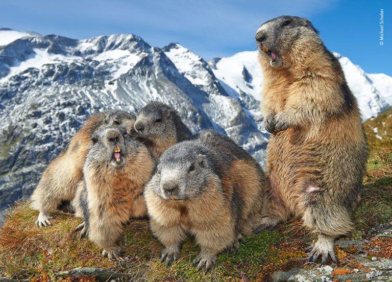 21 Photos From The Wildlife Photographer Of The Year Contest 2019 Creativity Bay Wildlife Photography Wildlife Animals