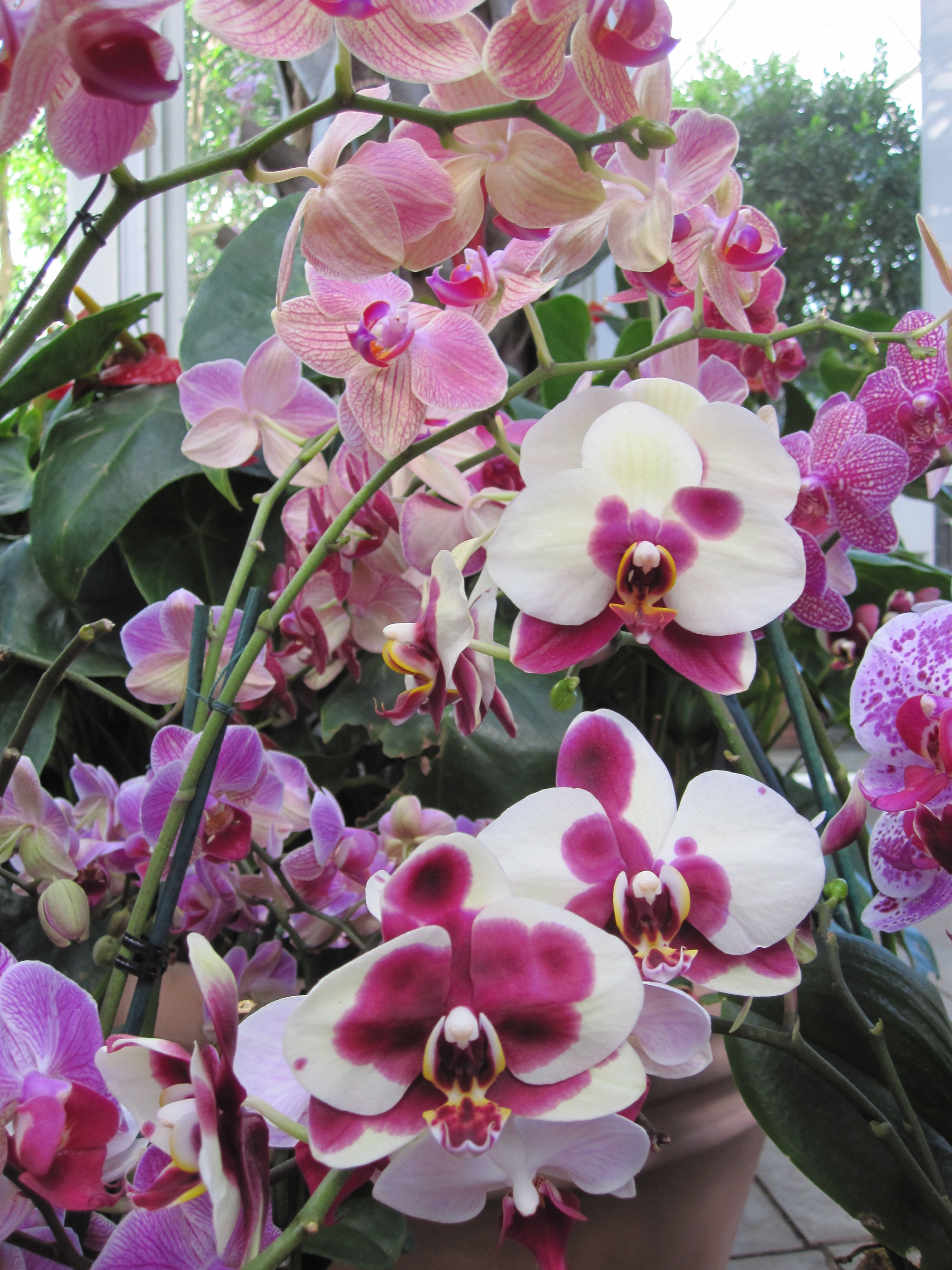 Flores Phalaenopsis Orchid Orchids Orchid Roots