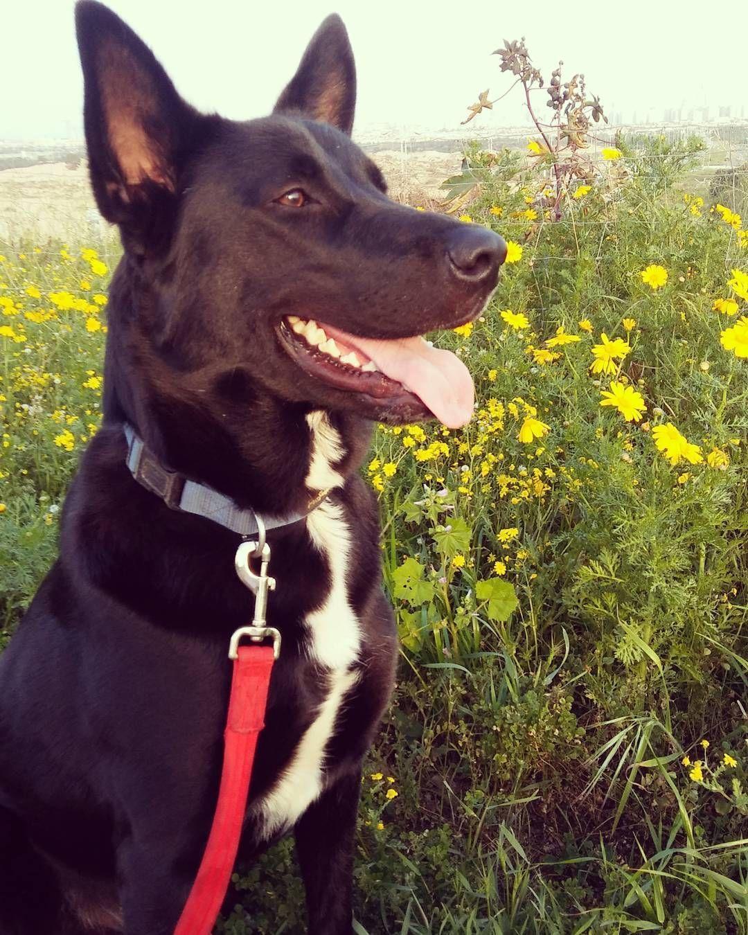 #smile# me#dog #dogsofinstagram #dogs#puppy #gym #fitness #love #beautiful #life #lifestyle #fun #fu...