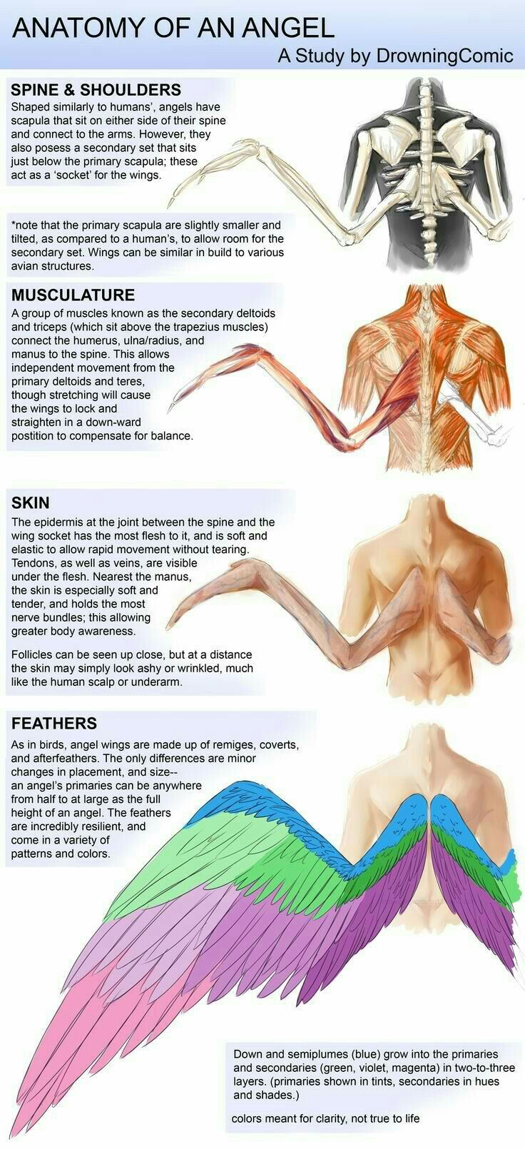 Feathers | Feathers | Pinterest | Feathers, Drawings and Anatomy