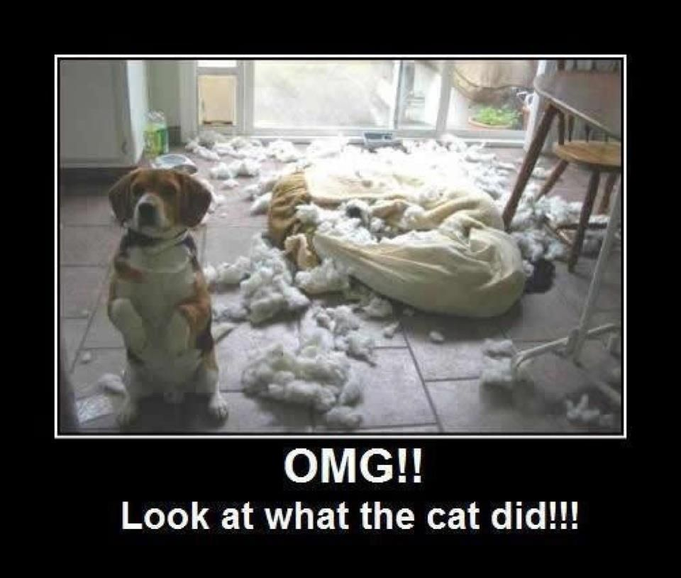OMG!! Look at what the cat did!!