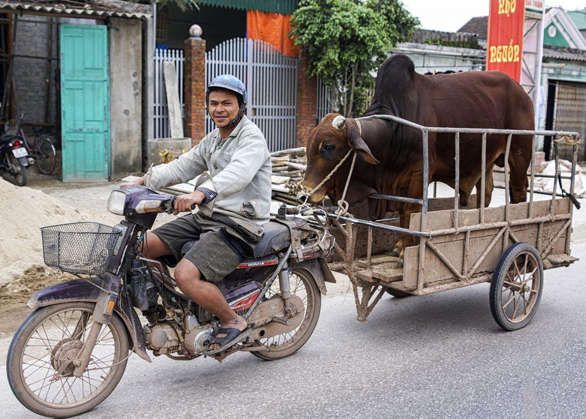 Motorbike Vietnam Onlyinvietnam Drivevietnam Vietnam Vietnam Travel Cargo Bike