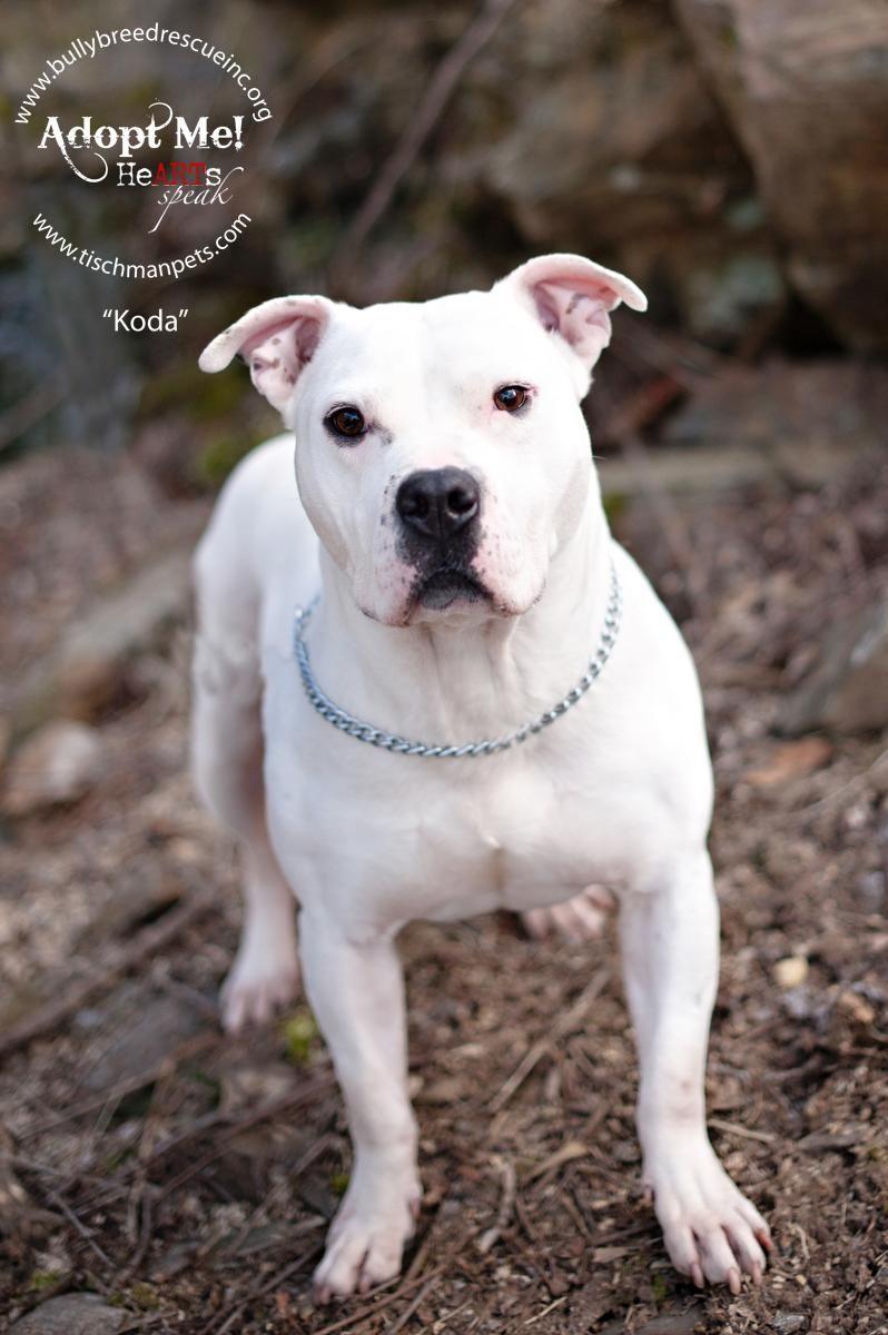 Adopt *Koda* on Dogs, Animals, Adoption
