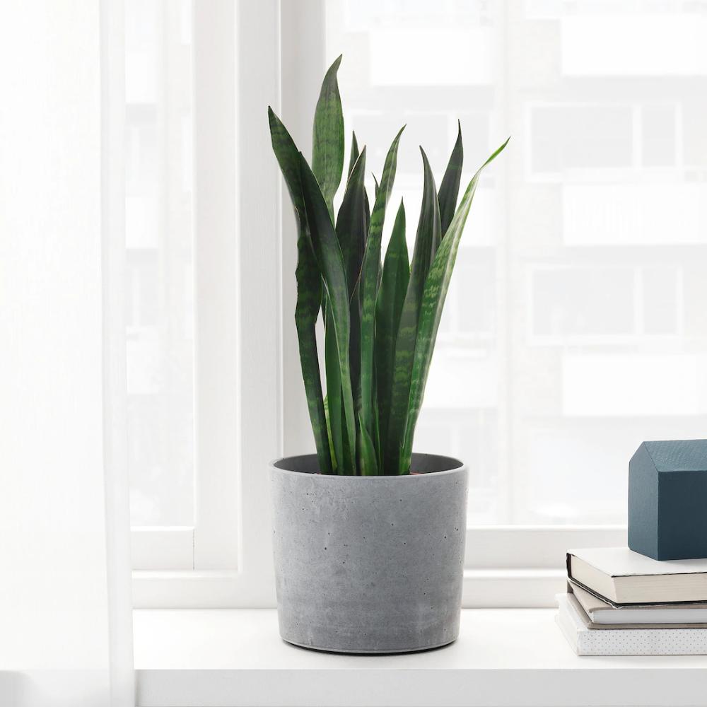 Boysenbar Plant Pot Indoor Outdoor Light Gray Ikea In 2020 Potted Plants Tall Indoor Plants Plants