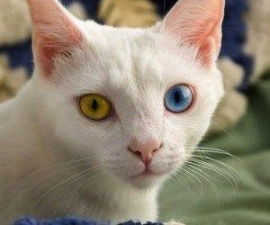 Ahhhhh It S One Of My Cats My Cats Eyes Are Just Like This