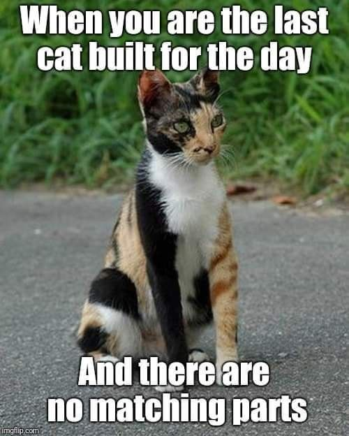 When You Are The Last Cat Built For The Day Funny Animal Pictures Funny Animals Cute Funny Animals