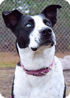 New York, NY Border Collie/Terrier (Unknown Type, Medium