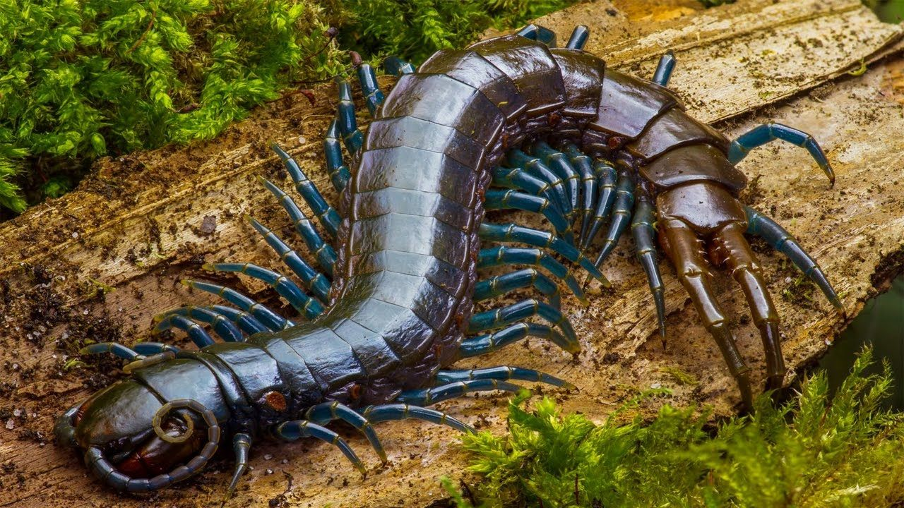 Top 10 Most Terrifying Insects in the World   YouDontKnow