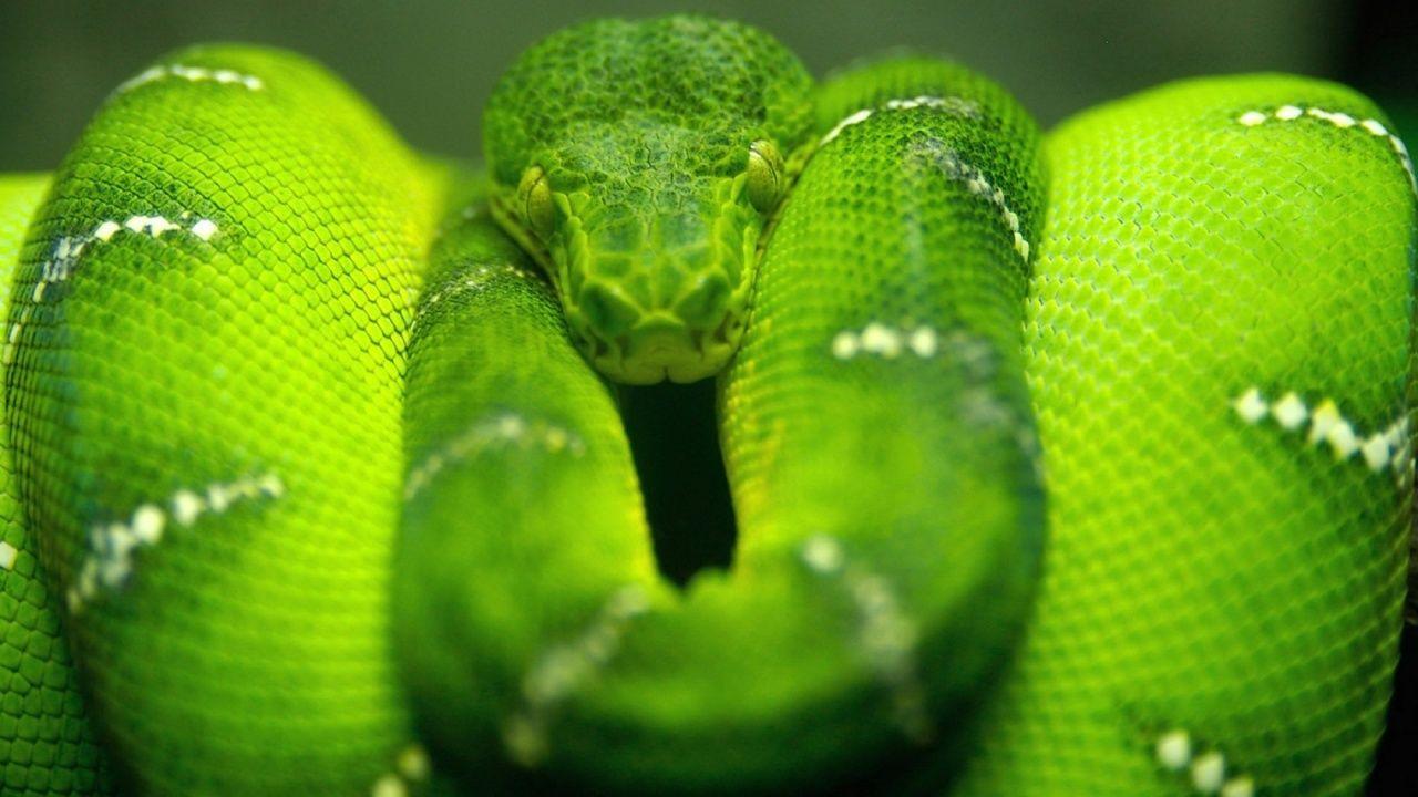 Greensssss