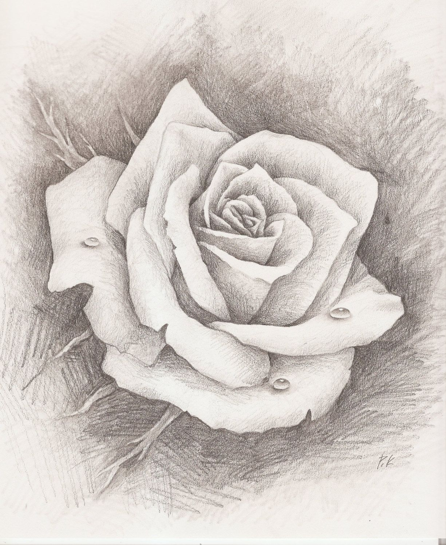 pencil drawn rose - Google Search | TATUAJES | Pinterest | Google ...