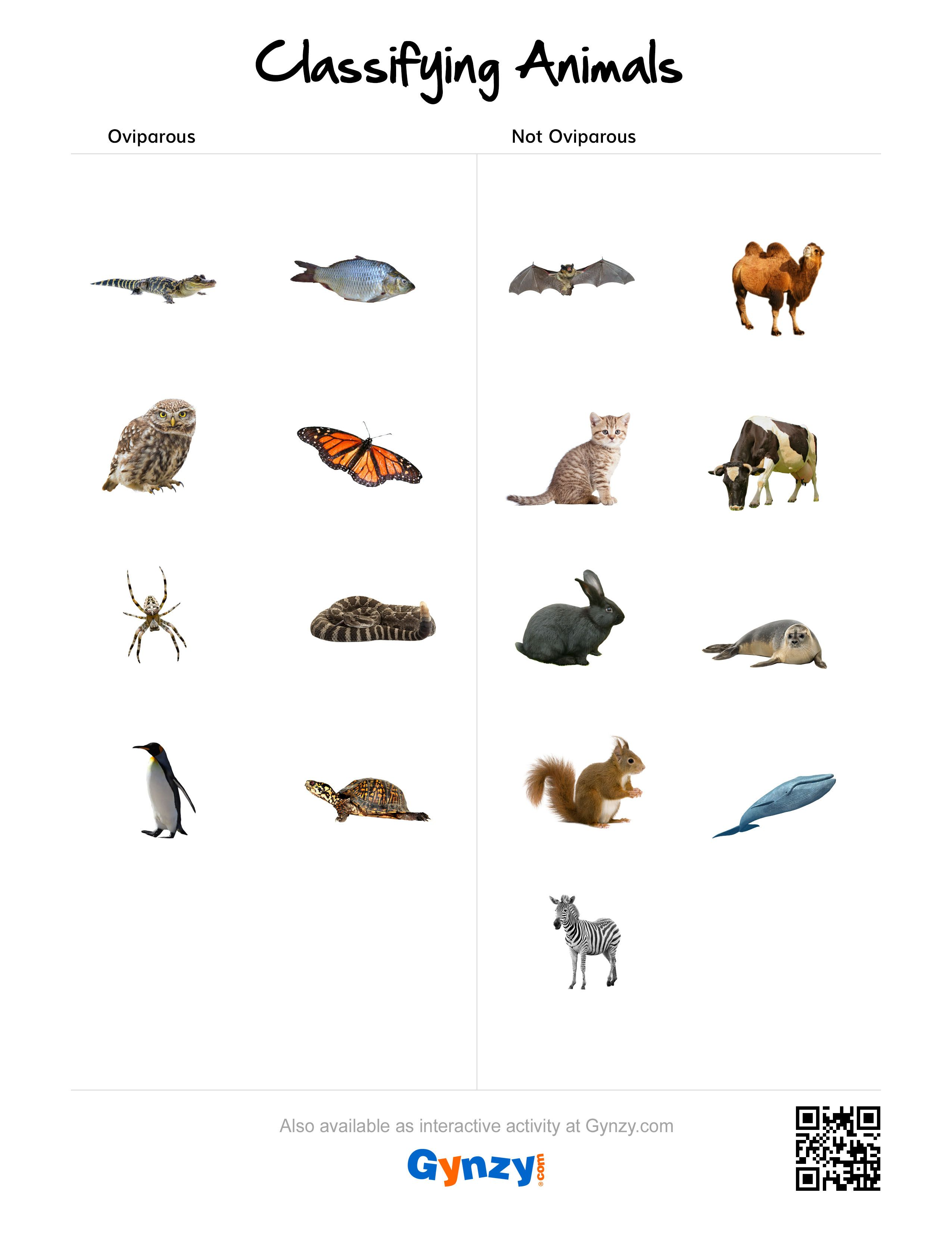 worksheet Classifying Animals Worksheet oviparous or not httpsr gynzy com285e12fa com classifying animalsanimal classificationinteractive whiteboardsmart boardsworksheets