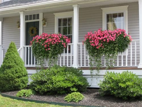 Really pretty wave petunias with bocopa trailing under - How to hang plants in front of windows ...