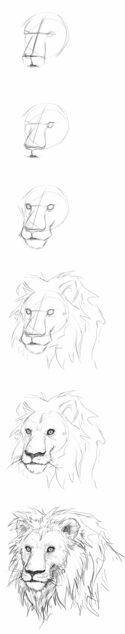 how to draw lion head step by step