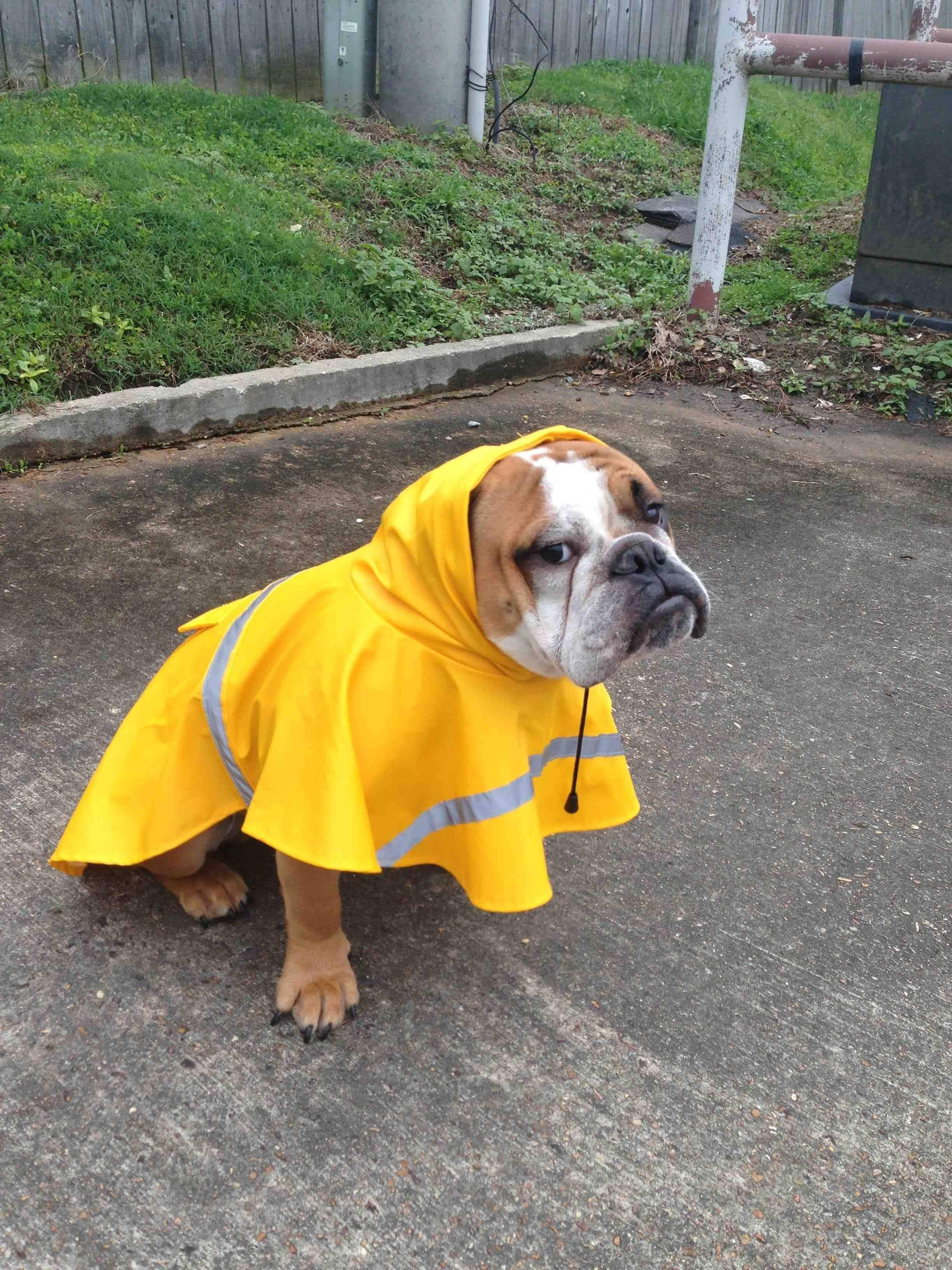 The Only Way He Ll Go Outside In The Rain Cute Animals Cute