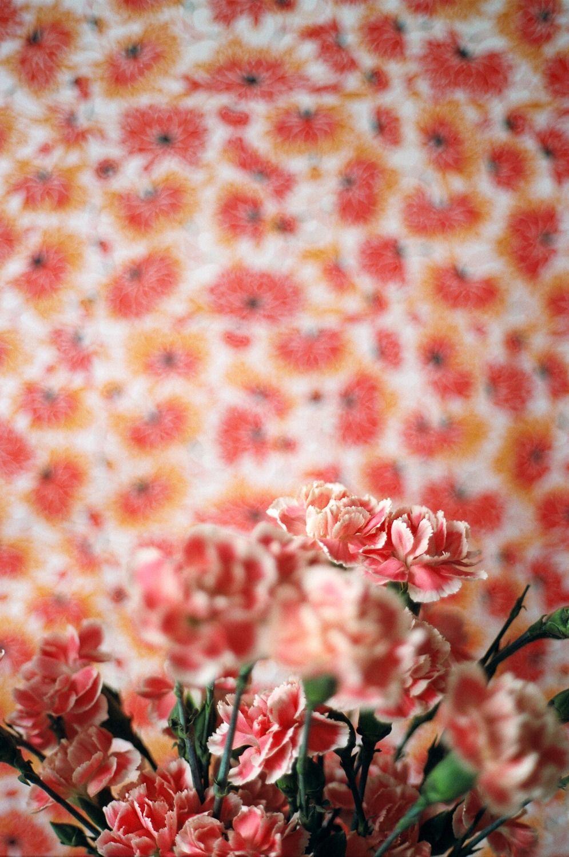 bobbydoherty : Photo | Цветы
