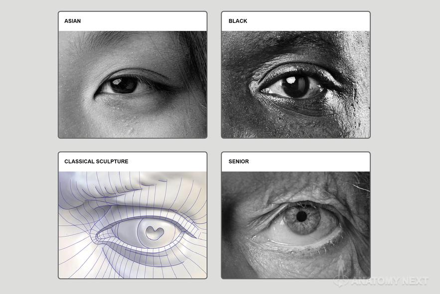 Anatomy Next - Anatomy of Head & neck: Anatomy & features | Facial ...