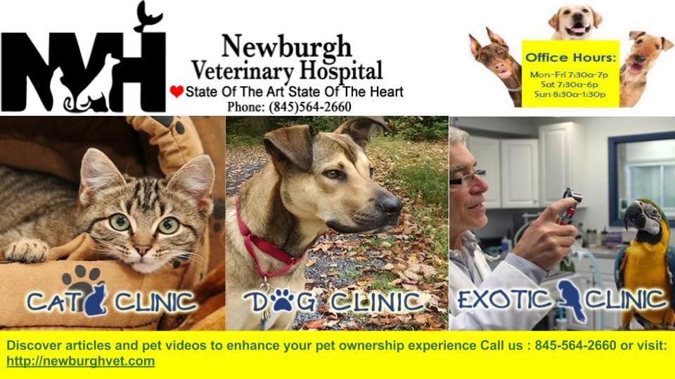 Animal Hospital Newburgh Pet Vet Animal Hospital Veterinary Hospital