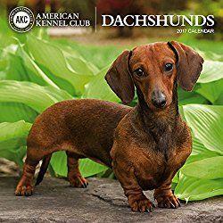 American Kennel Club Dachshunds 2017 Wall Calendar Dachshund