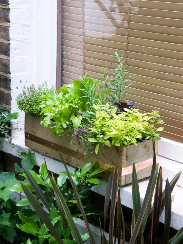 Delightful Make A Window Box Of Herbs And Lettuce