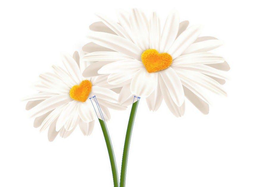 Gambar Bunga Latar Putih Bagaimana Menggambar Bunga Aster Berbentuk Hati Di Illustrator Pink Rose Bunga Latar Belakang Foto Grati Gambar Bunga Gambar Bunga