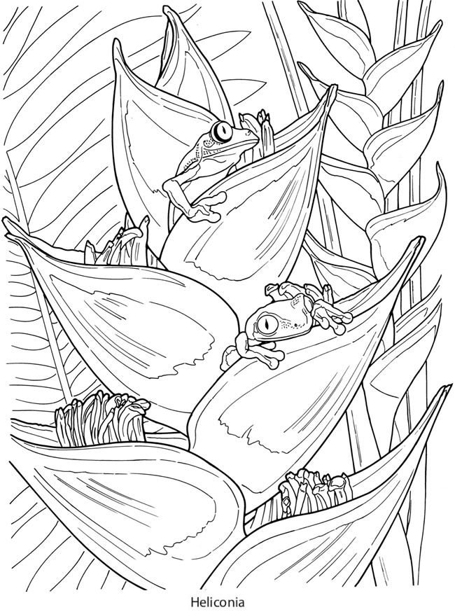 Creative Haven Tropical Blooms Coloring Book Dover Sler Rhpinterest: Coloring Pages Birds And Blooms At Baymontmadison.com