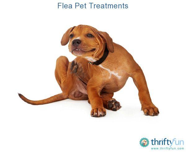 Flea Pet Treatments