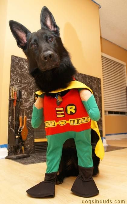 Black German Sheperd German Shepherd German Shepherd Dogs