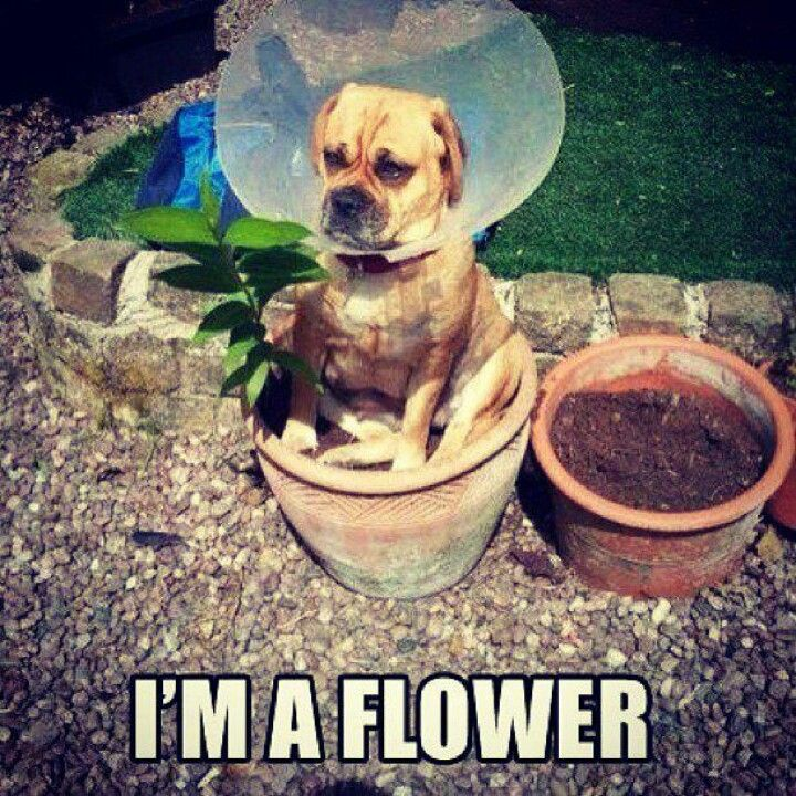 Hehe. The cone of shame