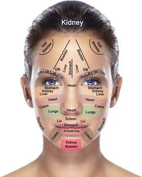 How your face reflects the health of your organs diy beauty how your face reflects the health of your organs ccuart Choice Image