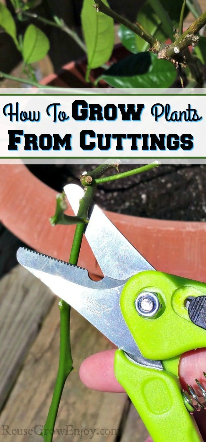 There are lots of different ways to grow plants. One of those ways it to grow plants from cuttings. Here are some tips and tricks on how to grow plants from cuttings! #gardentypes #garden #types #plants