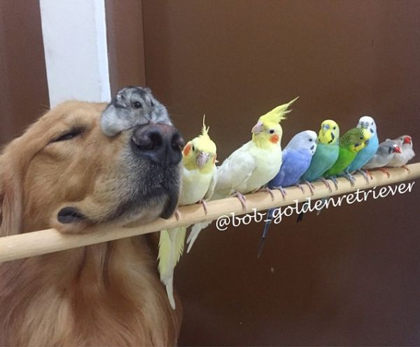 This Dog's Best Friends Are 8 Birds and a Hamster - Neatorama