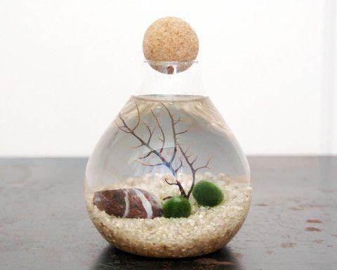 Marimo Moss Ball Terrarium – Moss + Twig